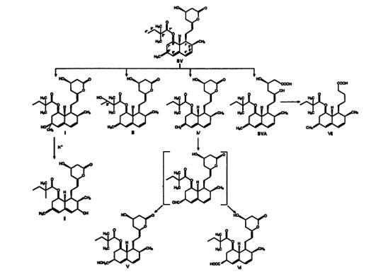 The figure presents the structures of the metabolites of simvastatin identified in the studies