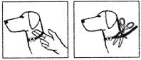 Tillpassning av halsband
