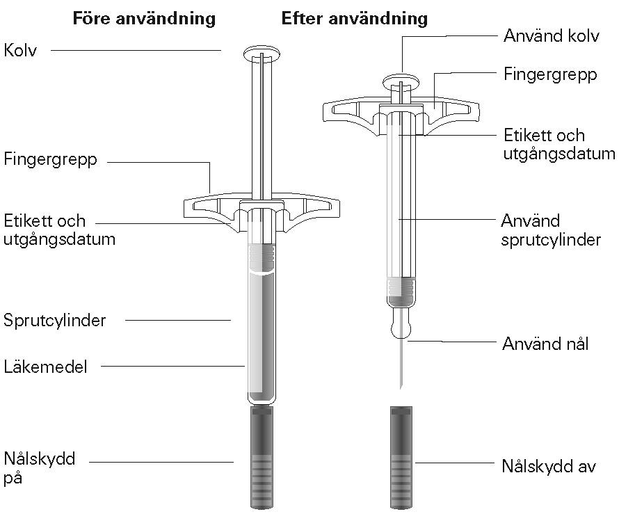 Sprutans olika delar
