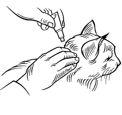 Applicera i kattens nacke