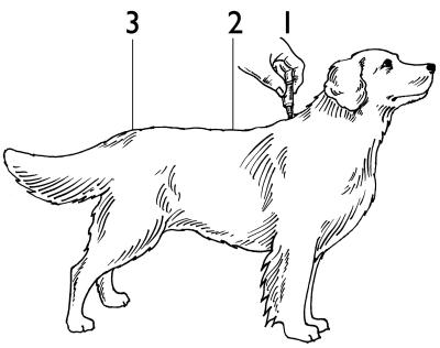 Applicera längs hundens rygg